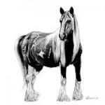 draft-horse 1